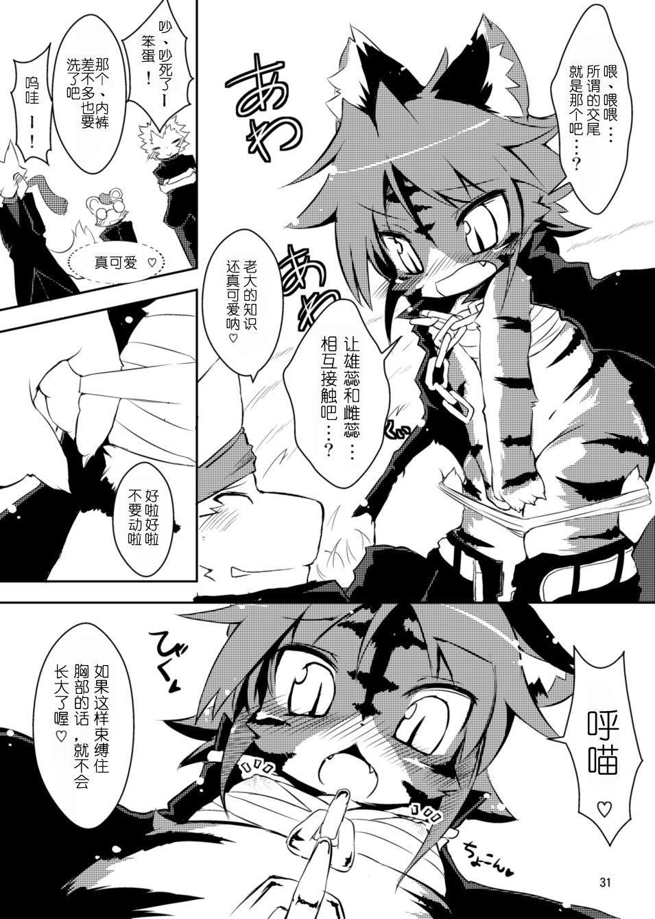 Sakigake! Toraman Bancho-chan! 13