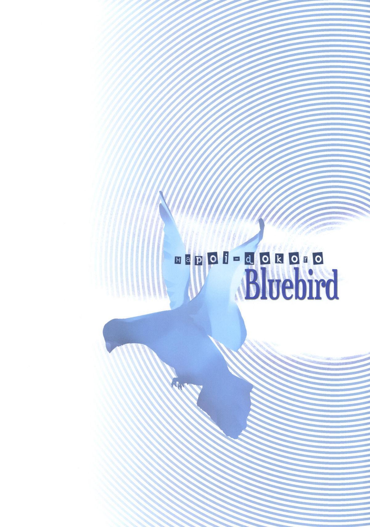 Bluebird 25